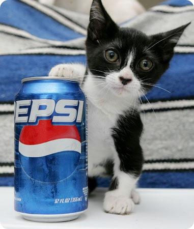Котенок из Сан–Диего по кличке Heed