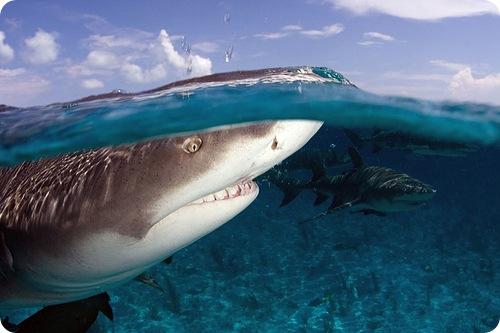 Морские хищники охотятся по математическим законам