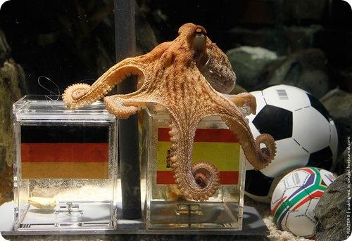 Очередное предсказание осьминога Пауля