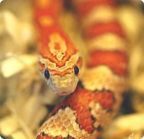 Жительница Англии постирала огромную змею