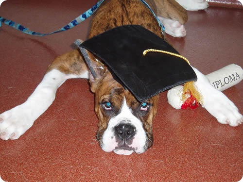 Дипломированные собаки