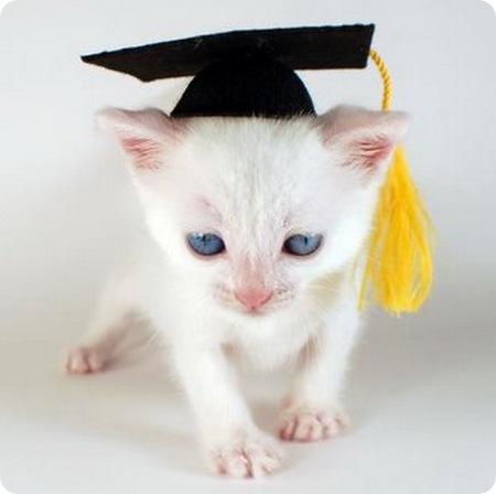 Дипломированные кошки