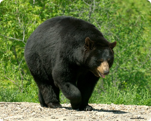 """Медведь """"ограбил"""" американскую семью"""
