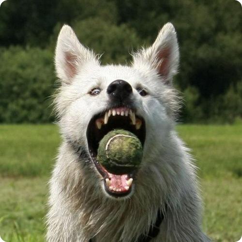 Ученые выяснили, почему кусаются собаки