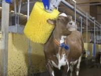 Автомойка для коров