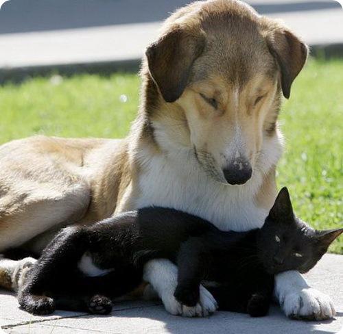 Как кошка с собакой - Подборка 8