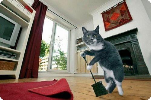 Домашний трудяга