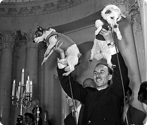 50 лет назад космос покорили собаки Белка и Стрелка
