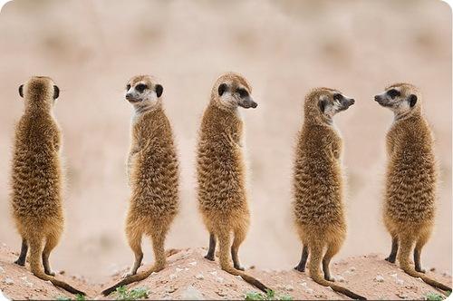 Удивительные мамы животного царства