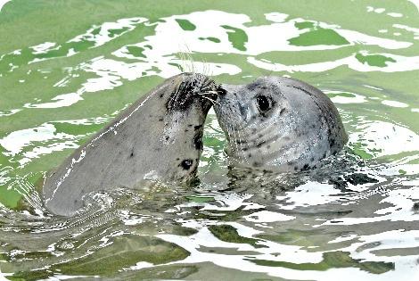 В LA, впервые за всю историю зоопарка, родился тюлень