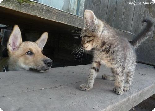 Как кошка с собакой – Подборка 9