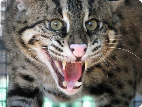 Джон Дэвис - кот рыболов
