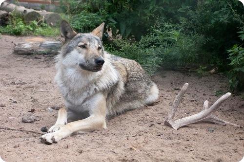 Знакомство с Ленинградским зоопарком