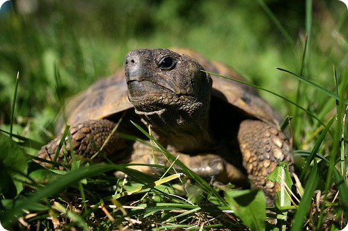 Черепахи-космонавты