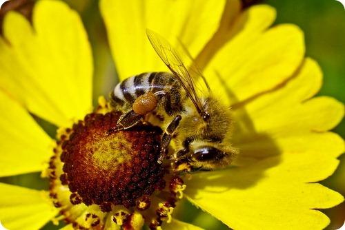 Интересные факты про пчел