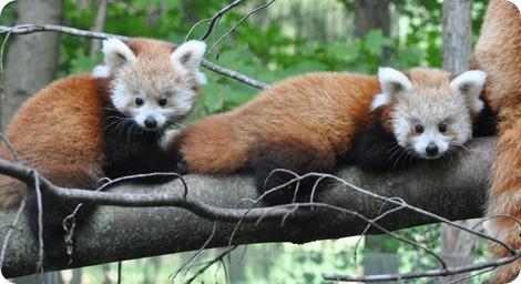 Рождение двойняшек в зоопарке Биндер Парк