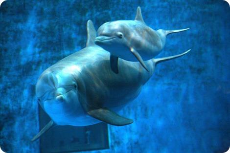 Дельфинчик из зоопарка Миннесоты готов к приключениям!