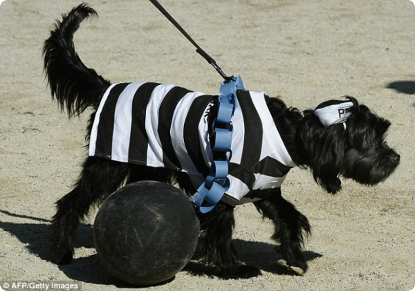Собачий парад в честь праздника Хеллоуин