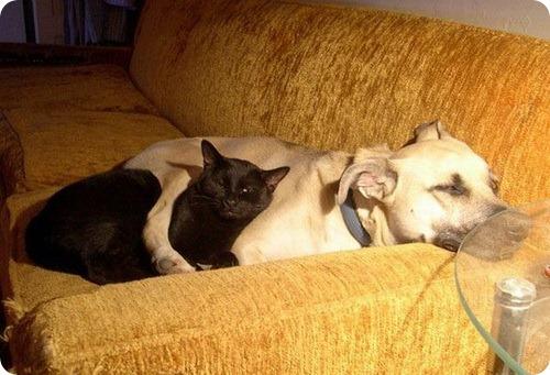 Как кошка с собакой – Подборка 10
