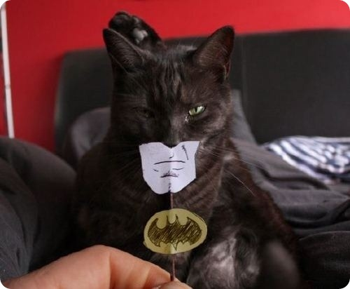 I Am Catman