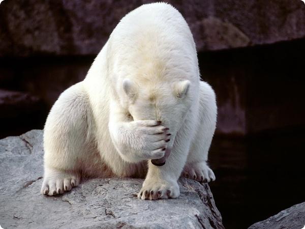 Кто мог стрелять в белого медведя по кличке Врангель?
