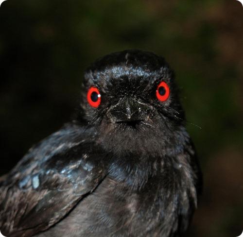 Птицы крышуют своих подопечных