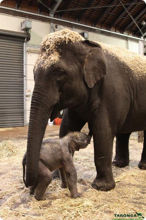 Маленькое счастье огромной слонихи