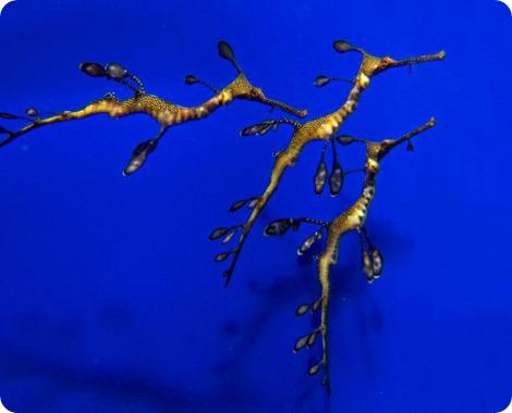 Рождение лиственных драконов !
