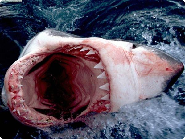 Земля и вода - волки и акулы