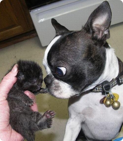 Как кошка с собакой – Подборка 12