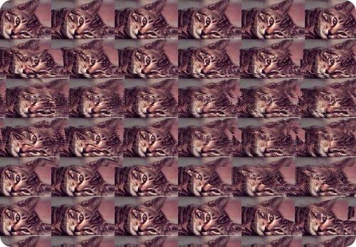 Стерео картинки с животными