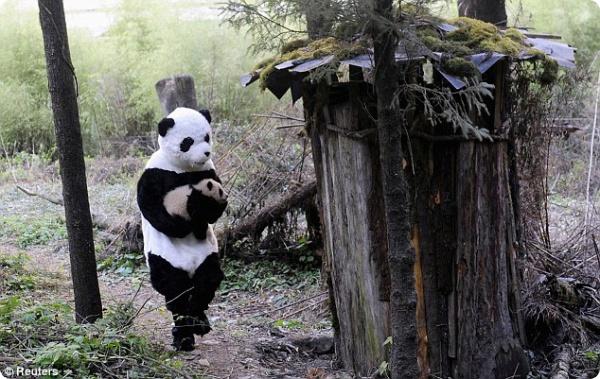 Зачем ученым костюм панды?