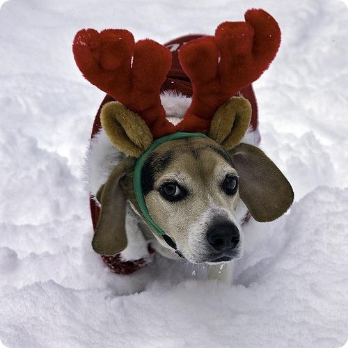 Новый год опасен для животных
