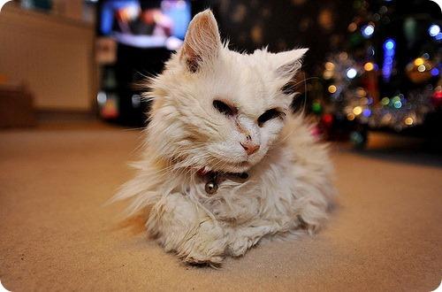 Самая старая кошка Англии