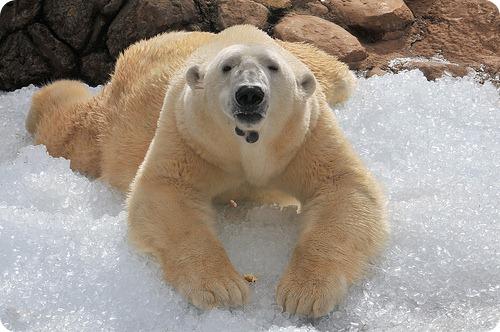 10 заблуждений о животных
