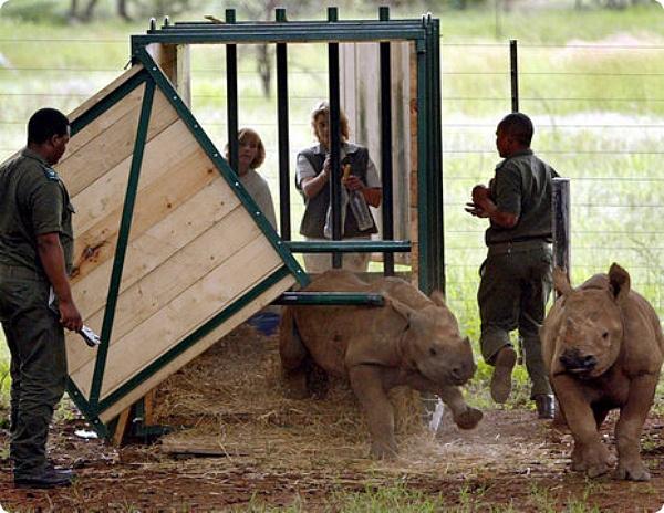 Остановить уничтожение носорогов