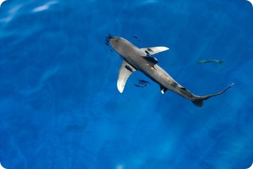 В Шарм-эль-Шейхе пьяный турист раздавил акулу