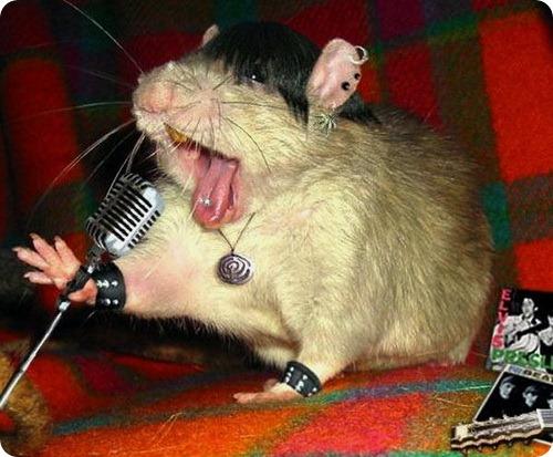 Генетики создали поющую мышь