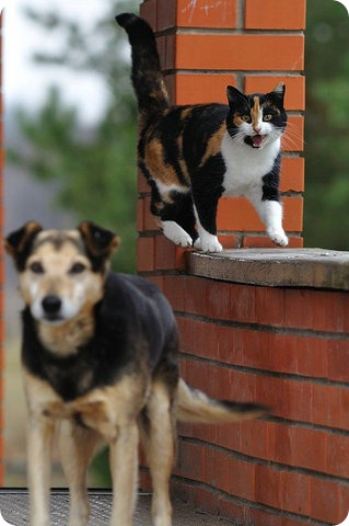 Как кошка с собакой – Подборка 13