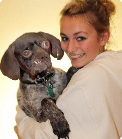 Самая уродливая собака Британии