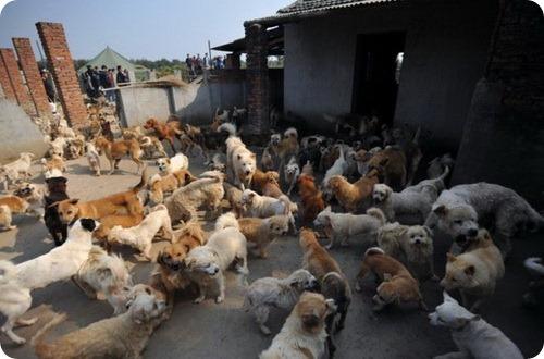 1500 бродячих собак и 200 кошек