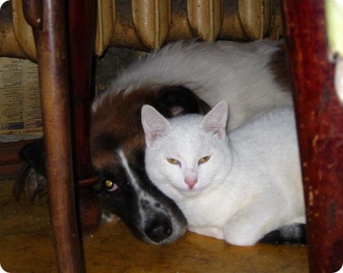 Как кошка с собакой - Подборка 14