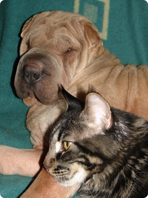 Как кошка с собакой – Подборка 14