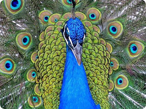 Раскраска попугай Распечатать картинки бесплатно