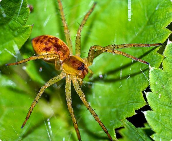 Боязнь пауков прививается воспитанием