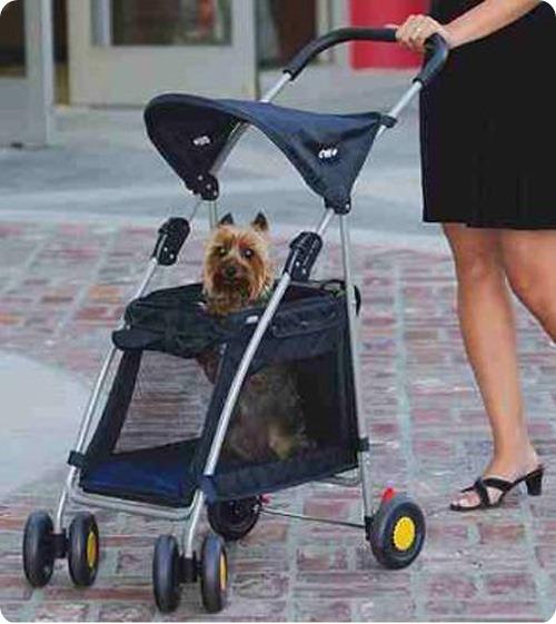 Кошки и собаки в колясках