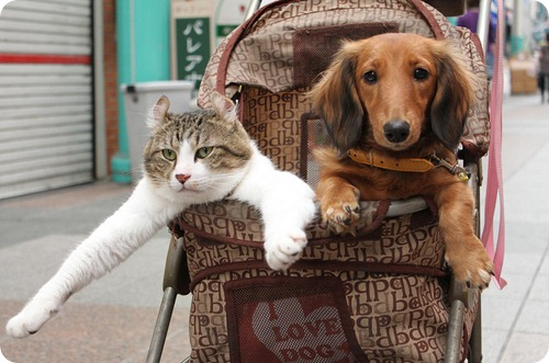 cats_dogs_strollers_083.jpg