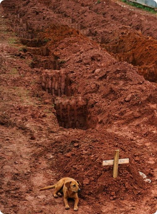 Верный пес не покидает могилу хозяйки в Бразилии