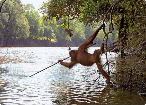 Новый взгляд на эволюцию приматов