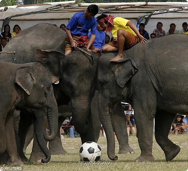 Как слоны в футбол играли…